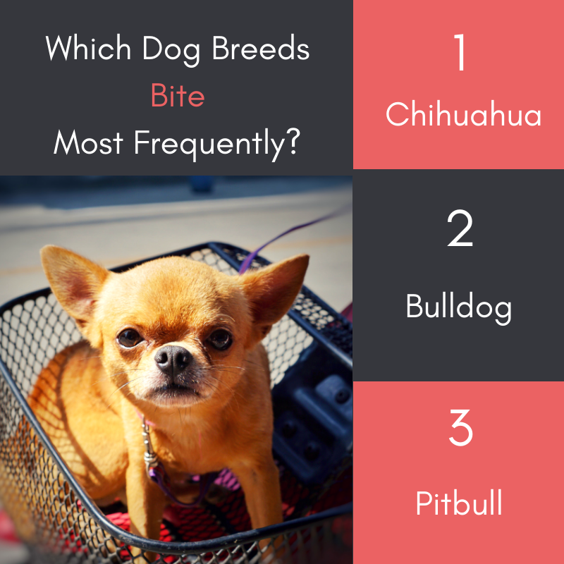 Dog Breeds That Bite the Most